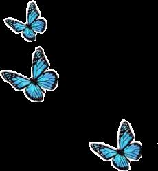 freetoedit blutterfly blue bluesky