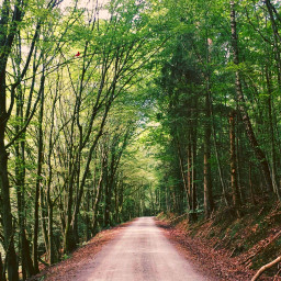 freetoedit forest nature road lonely