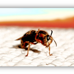 freetoedit wasp colorful love