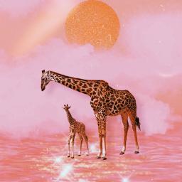 freetoedit family girafa evening moon