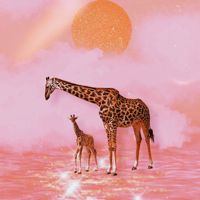 #freetoedit #family #girafa #evening #moon  Thank s for the nice sticker!!💗