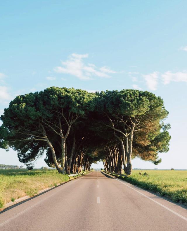 #roadtonowhere #emptyroad #countryside #wildplants #trees #pinetrees #blueskyandclouds #horizon #nature #vanishingpoint #lowangleshot                                                                 #freetoedit