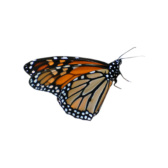 #freetoedit #butterfly #real