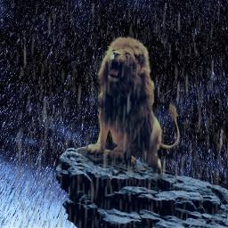 lion lionking roar thelionking rain freetoedit
