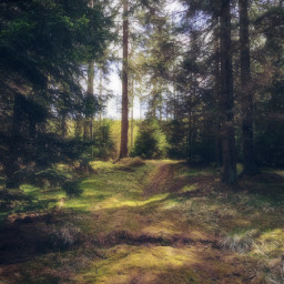 freetoedit nature photography myphoto forest