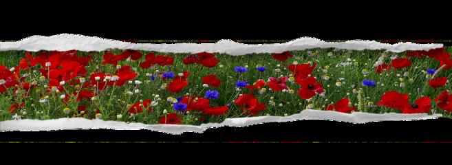 бумага бумагарваная бумагасцветами бумаганебо бумагаморе freetoedit