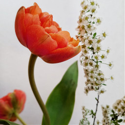 fotography flower flowerpower orange green
