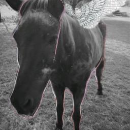 andi blackandwhite pony isi horse freetoedit