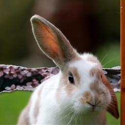 freetoedit floralpaperchallenge floralpaper bunny pinkflowers ecfloralpaper