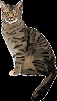 freetoedit cat feline pet