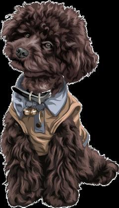 freetoedit dog puppy cockerspaniel pet