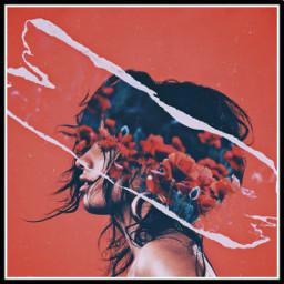 freetoedit havana camilacabello rose rosegirl ecfloralpaper floralpaper