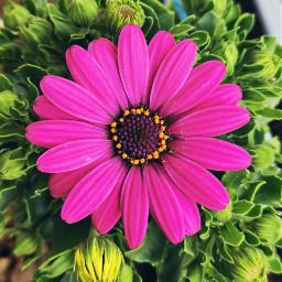 nature flower closeup colourful mygarden freetoedit