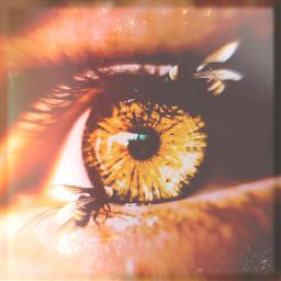 freetoedit eyecloseup eye bees dandelion