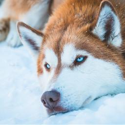 animaleye animaux chien freetoedit
