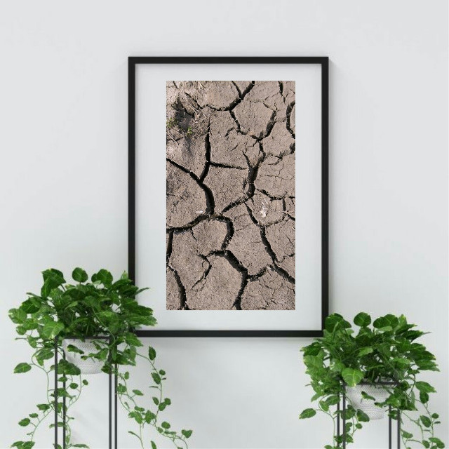 #freetoedit #remixedwithpicsart #nature #dry #may2020 ##photography