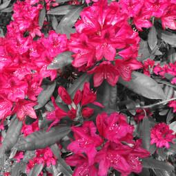 freetoedit naure photography summer pink