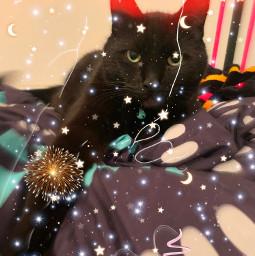 freetoedit cat black fireworks brush