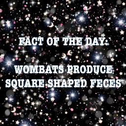 fotd facts fact true wombats