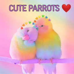cuteparrots newfoto lovepicsart😙💙 freetoedit lovepicsart