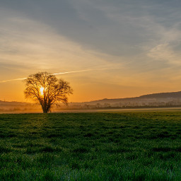 photography mypic sunrise morning tree freetoedit