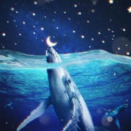 freetoedit whale moon stars water