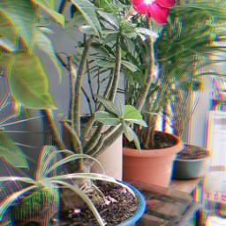beatifulday garden flowersforlove freetoedit