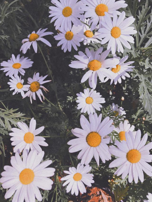 #freetoedit #vintage #flowers #spring #photostory