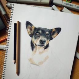 dog animal traditonalart drawinf art freetoedit