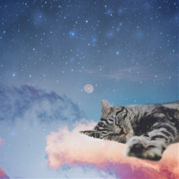 cats clouds moons stars createfromhome freetoedit