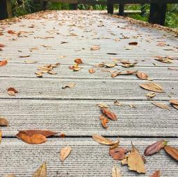 freetoedit leaves nature wood walk