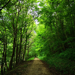 freetoedit pathway tree green nature