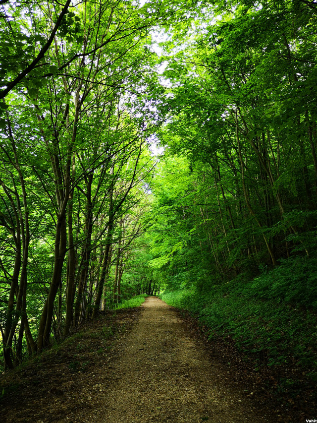 #freetoedit #pathway #tree #green #nature #color #myphoto