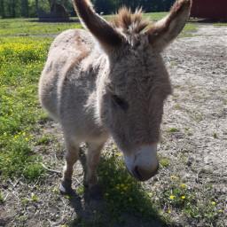 animals donkey whatamidoingwithmylife hashtag idkmanwtf