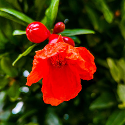 nepal flower naturalbeauty