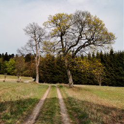 freetoedit road trees dirtroad grassland