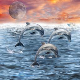 freetoedit dauphin dauphins lune lunes