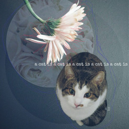 freetoedit cat collage flower cute  hello!
