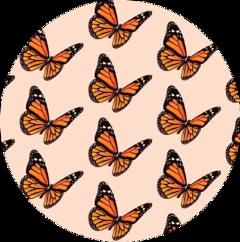 sticker butterflies orange peach circle freetoedit