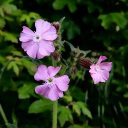 nature flower closeup wildflowers mydailywalk freetoedit