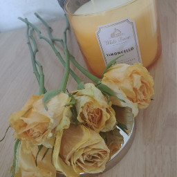 roses candle limoncello yellow yellowroses freetoedit