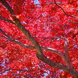 freetoedit outdoorphotography lookup radmaple sunyday