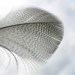 freetoedit feather fluffy simplicity interesting