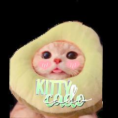 kittycado kittycados freetoedit