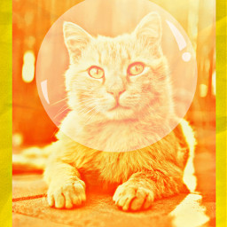 freetoedit cat astronaut yellow orange