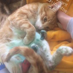 freetoedit mycat hurt cute captainmeowmeow