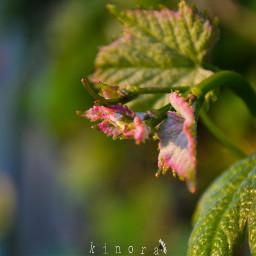 freetoedit kinora closeup close closeupshot
