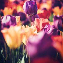 wonderfulworld nature colorfulnature flowers naturesbeauty freetoedit