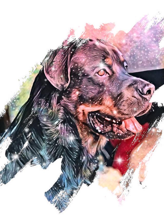 #freetoedit #dog #furbaby #rotweiler #rotweiller #ireland #philippines #yunisbibi