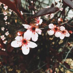 flower flowers photography blossombush blossom freetoedit